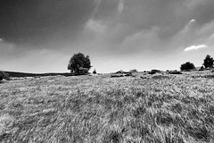 Wind meets grass and stone (Andrs Gyrgy) Tags: hungary stone grass wind bw
