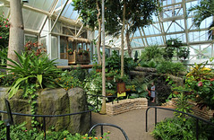 Pacific Island Water Garden (Pythaglio) Tags: pacific island water garden franklin park conservatory columbus ohio county biome plants botanical botany tropical path railings retaining wall stone trees bushes green overlook thatch woman windows condensation blue sky sign