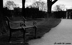 Siempre te espero / I always wait for you (En medio del camino) Tags: bw monochromatic outdoors europa europe dinamarca denmark copenhague copenhagen kastellet banco seat camino road diagonal soledad loneliness