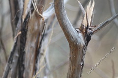 Meyer-Optik Grlitz Primotar 180mm f/3.5 (sample-image.com) Tags: meyeroptikgrlitzprimotar180mmf35 meyeroptikgorlitzprimotar180mmf35 meyeroptik meyer grlitz gorlitz primotar 180mm f35 m42 screwmount exakta pentaconsix p6 mf manualfocus old classic retro tele lens sampleimage samplepicture test sample pic picture image images pictures digital canoneos500d canon eos 500d