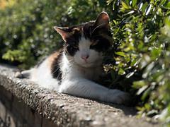 Alley Cat (alex props) Tags: alleycat straycat greenwich stare