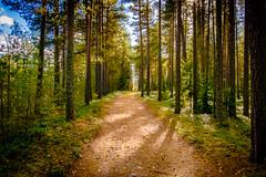 Solitude (Lena_CS) Tags: footpath path way light sunrays autumn fall trees