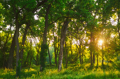 Shining On (giantmike) Tags: rays trees morning madison wi shadows sun light hdr nature canonef24105mmf4lis