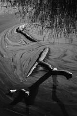 floating log (Justin Barrie Kelly) Tags: log fujixa1 bw lightanddark blackandwhite water justinbarriekelly justinkellyartist jbkelly justinkelly justinbkelly blackandwhitephotography