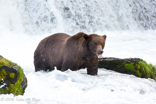 Slurp and Yummy Bears