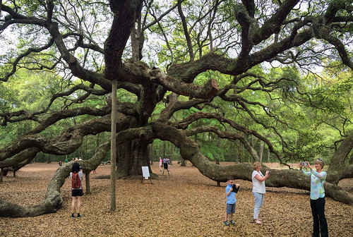 The Great Angel Oak Tree of South Carolina