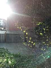 April 15: Baby leaves, evening light (the ekt) Tags:
