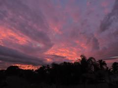 What a sunset (Dreaming of the Sea) Tags: blue bundaberg sky storm nikon p520 pink pinksunset palmtrees orange orangesunset clouds cloud sunset dusk topf25 1000v40f