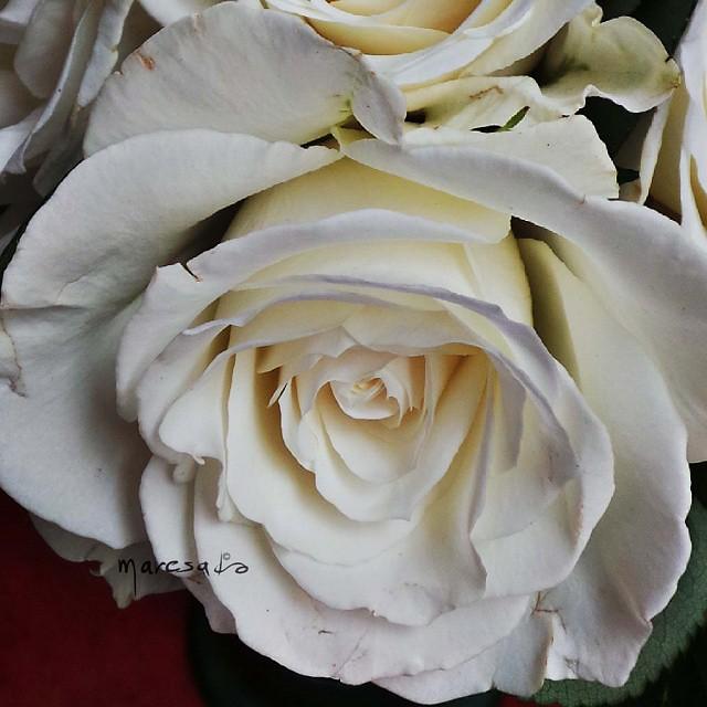 10 maggio: Buona festa della mamma! Bone fête Des Mères ! Happy Mothers day