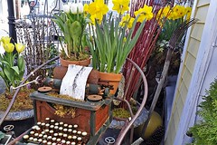 Daffodils and Keys (AntyDiluvian) Tags: typewriter boston shop store marblehead massachusetts northshore daffodil florist flowershop birchbark manualtypewriter floresmantilla