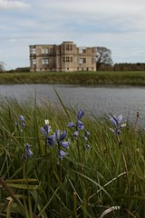 Lyveden New Bield behind the bluebells (Carol Spurway) Tags: new nt northamptonshire elizabethan nationaltrust newbuild lyveden bield oundle