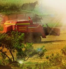 2016-07-20 Wie im wilden Westen (eagle1effi) Tags: harvest pferd ernte tbingen funshot sx60