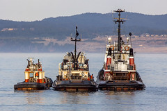 Three Amigos (Paul Rioux) Tags: britishcolumbia vancouverisland victoria ogdenpoint prioux outdoor transportation tug boat boats seaspan marine vessels work three triple size ascending descending morning dawn daybreak calm water