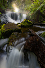 Horseshoe Falls (hillsee) Tags: light waterfall moss rocks raw ultimate falls tasmania horseshoe lightroom sunstar mtfieldnationalpark manfern