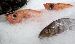 North Market Street (alh1) Tags: usa boston market massachusetts redfish northmarketstreet
