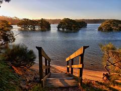 Down to the water (elphweb) Tags: ocean water seaside australia mangrove inlet hdr ooceaninlet