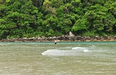 toca minh'alma (Ruby Ferreira ) Tags: bertiogasp litoralnortepaulista praiaocenica forest mataatlntica fisherman pescadorsolitrio brasil brazil beach atlanticforest