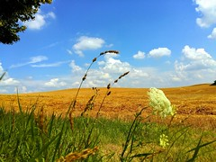 My summer feeling... (Tobi_2008) Tags: sommer summer landschaft landscape himmel sky natur nature sachsen saxony deutschland germany allemagne