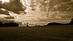 Evening in mono (J. Roseen) Tags: bw mono monochrome monokrom svartvit countryside landet evening kvll lumia950 pureview carlzeiss jrgenrosn summer sommar sverige sweden norden nordic skandinavien scandinavia