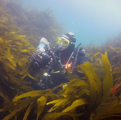 18 July 2016 - Scillies Trip PICT0212 (severnsidesubaqua) Tags: scillies scilly scuba diving