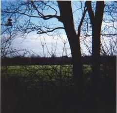 Scan 4 (MokaPhotography) Tags: lomography lomo diana analog film