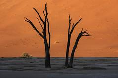 Deadvlei (J-C-M) Tags: deadvlei sossusvlei dead trees namib desert namibia sand dunes salt pan africa dawn sunrise