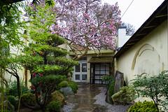 Birmingham Botanical Gardens - March 2016 (I.T.P.) Tags: birmingham gardens japanese flowers