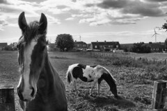 The price of apples (DanHarperr) Tags: horse haswell d3300 nikon newbie