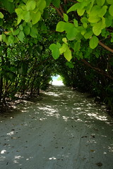 Island path (survivingmaldives) Tags: jumeirah vittaveli maldives surviving