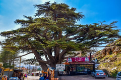 The Famous Cedar Tree, Lebanon (Paul Saad) Tags: cedars cedar tree bsharri bcharre lebanon nature sky nikon