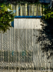 bamboo water streaks (danilew) Tags: 2016 adobe dallas july lightroomcc ononesoftware perfecteffects9 photoshopcc2015 tx texas bushes delusions flora foliage illusions nature opticalillusions plants reflections ripplingwater scenery shrubbery shrubs streaks water