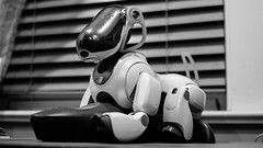 Bingo was his name (john m flores) Tags: robot dog bingo