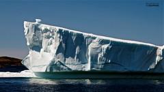 iceberg #1 (le Brooklands) Tags: blue d7000 green ice iceberg maintickle newfoundlandlabrador sigma2470mm twilingate twillingateadventuretours white