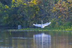 Late afternoon walk (pdecell) Tags: bakerwetlands canon400mmf56