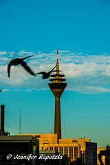 Rhine tower with birds (Bernsteindrache7) Tags: summer panasonic lumix landscape outdoor color city heaven himmel sky clouds light build flora fauna nrw germany blue dsseldorf