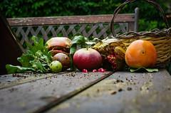 Autumn.. (Angelo Petrozza) Tags: autumn autunno apple mela kaki melograno stilllife fall basilicata pentaxk20d colours colori quercia galle andricus cynips kollari