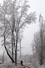 The man who going to home. (RKAMARI) Tags: cold documentary frozen karekareankara man street trees winter monochrome bw