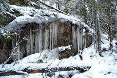 Icicles on a snowy precipice in spruce forest (Espoo, 20120114) (RainoL) Tags: winter snow forest espoo finland geotagged january u icicle fin 2012 uusimaa nyland esbo 201201 20120114 geo:lat=6029060700 geo:lon=2453838100