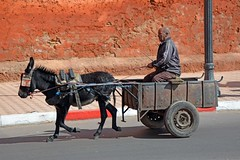 Heir of Ben Hur (JohntheFinn) Tags: africa unescoworldheritagesite morocco maroc marrakech souk medina marrakesh marokko afrique highatlas afrikka