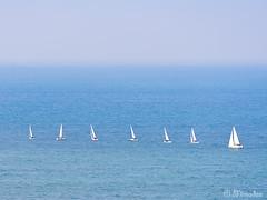 sailboats (Mimadeo) Tags: ocean blue sea summer sky white water sailboat boat ship wind yacht many sail recreation
