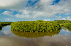 Rio dos Frades (Marcelino Dias) Tags: rio river dos mangrove bahia mangue frades itaquena