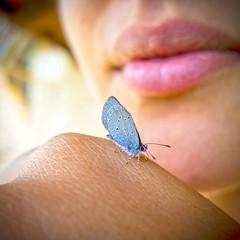 farfalla (alright1) Tags: andrea lazzarotto farfalla butterfly labbra lips estate summer