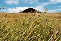 Poukawa, Hawke's Bay (paulhamernz) Tags: abandoned hawkesbay oldfarmhouse longgrass poukawa