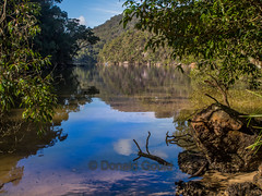 Waratah Creek_160710_18885 (Donald Go) Tags: park creek ring ku national newsouthwales waratah gai placesaustralia kuringgainatpark kuringgainatparkwaratahtrack