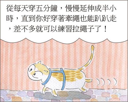 家裡來了一隻貓 貓牽繩
