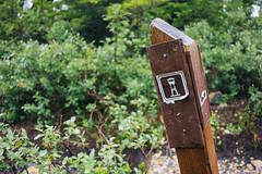 IMG_4035.jpg (Backpacking With Bacon) Tags: washington northerncascades hiking mtpilchuck granitefalls unitedstates us