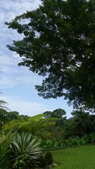 P1010971 (Mayan_princess) Tags: chiapas argovia finca resort caf coffee kaffee paraso paradise vegetacin vegetation verde green ro river spa relajacin relax forest selva orgnico autosostenible