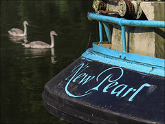 New Pearl (chando*) Tags: barge bateau birds boat canal cygnes nepearl oiseaux pniche ronquires swans