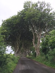 IMG_9464 (raehyunie) Tags: dark hedges ireland