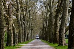 Platanenallee le long du Neckar (ichael C.) Tags: vacances allemagne visite tourisme platanenallee le long du neckar tbingen ville